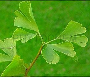 Ginkgo Biloba Extract 24/6% Water Soluble
