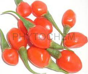 Gojiberry Extract 20% Polysaccharides