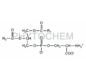 Phosphatidylserine Powder 50%
